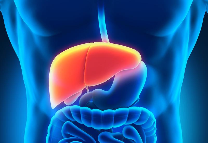 fígado-hepatograma